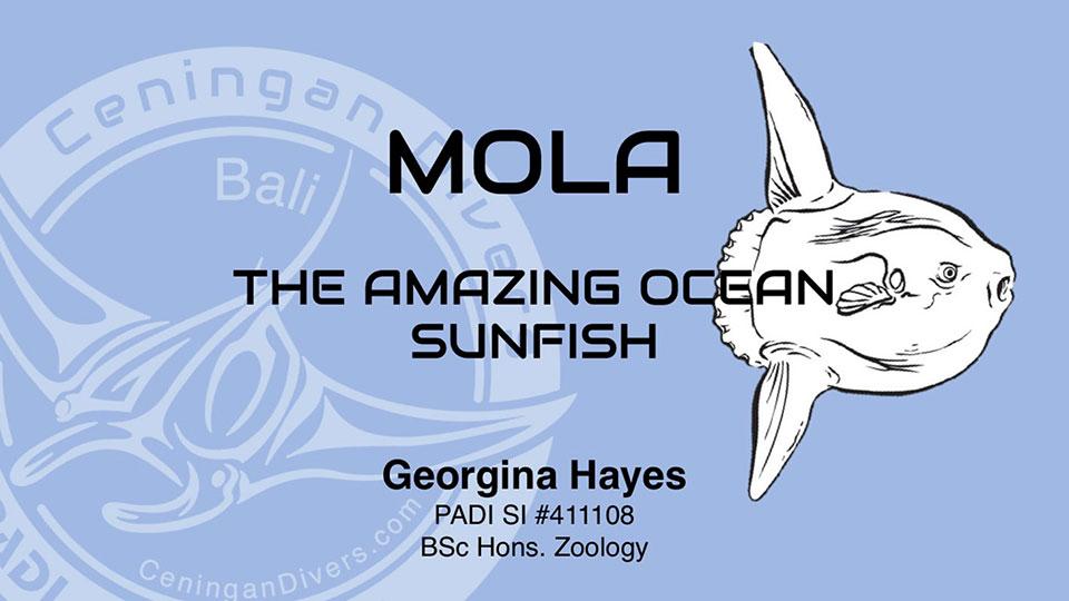 mola-worshop