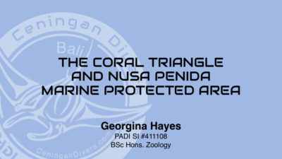 Coral Triangle Workshop